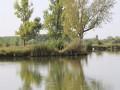 Зарибиха водоема в местността Долен Герен край Елхово с половин тон малки шаранчета